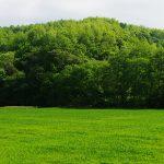 森・林・森林の違いとは