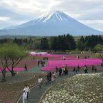富士芝桜まつり 駐車場の混雑状況と渋滞回避方法